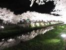 野川の桜ライトアップ(全体の写真)